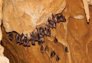 ресавская пещера сербия